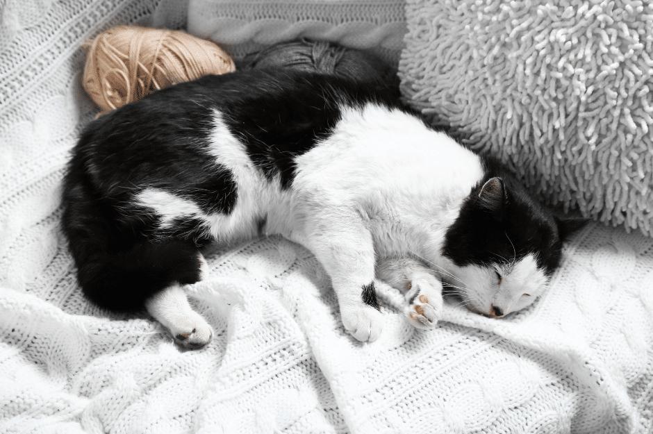 Jumelez confort et design agréable pour votre animal